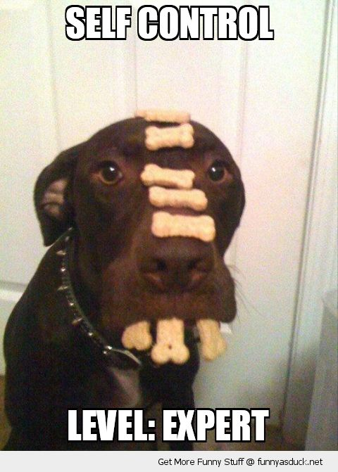 dog animal biscuits treats balancing nose mouth self control expert funny pics pictures pic picture image photo images photos lol