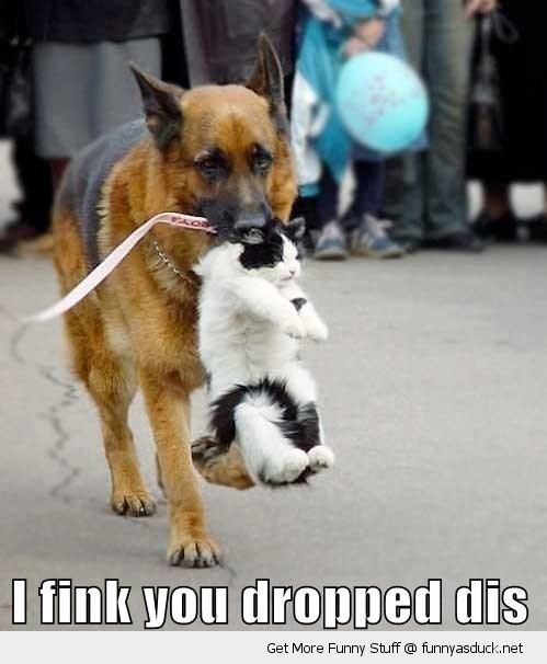 dog animal carrying cat lolcat mouth think you dropped this street funny pics pictures pic picture image photo images photos lol
