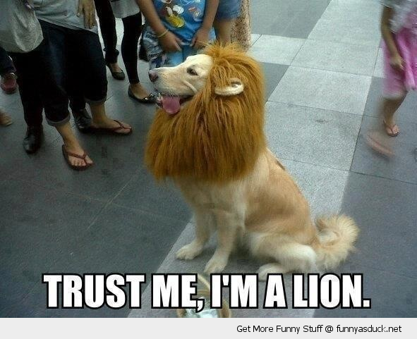 dog animal dressed up costume mane trust me i'm a lion funny pics pictures pic picture image photo images photos lol