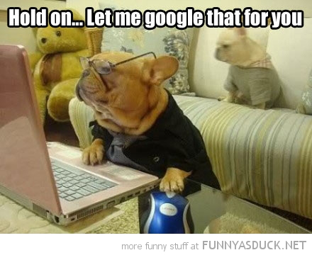 dog animal glasses computer laptop let me google that funny pics pictures pic picture image photo images photos lol