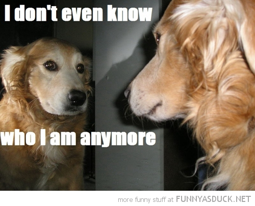 dog animal looking mirror don't even know who i am anymore funny pics pictures pic picture image photo images photos lol