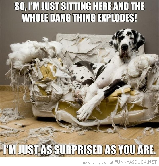 dog wreaked chair ripped sofa this thing exploded surprised animal funny pics pictures pic picture image photo images photos lol