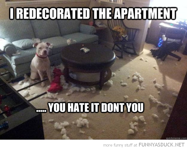 dog animal wrecked room redecorated apartment you hate it funny pics pictures pic picture image photo images photos lol