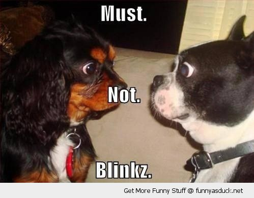 dog pug staring contest animal must not blink funny pics pictures pic picture image photo images photos lol