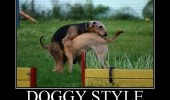 dogs animals sex doggy style doing it wrong funny pics pictures pic picture image photo images photos lol