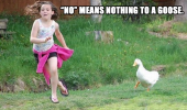 angry duck chasing girl kid animal bird no means nothing to a goose funny pics pictures pic picture image photo images photos lol