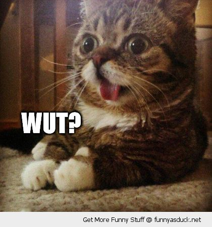 wut dumb cute face cat animal lolcat funny pics pictures pic picture image photo images photos lol