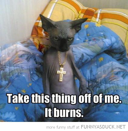 evil bald cat lolcat animal cross necklace take of burns funny pics pictures pic picture image photo images photos lol