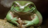 evil smile frog animal yes excellent clasped hands funny pics pictures pic picture image photo images photos lol