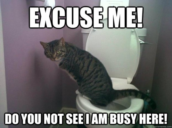 excuse me cat lolcat animal toilet bathroom i'm busy funny pics pictures pic picture image photo images photos lol