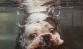dog splashing underwater swimming face found nemo funny pics pictures pic picture image photo images photos lol