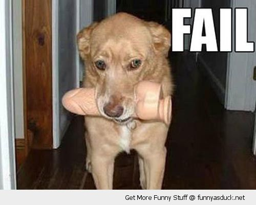 dog animal sex toy dildo fail mouth fetch funny pics pictures pic picture image photo images photos lol