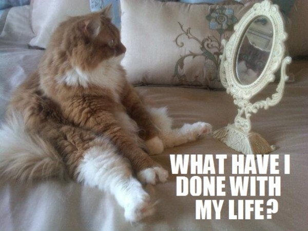 cat animal lolcat looking mirror depressed unhappy life funny pics pictures pic picture image photo images photos lol