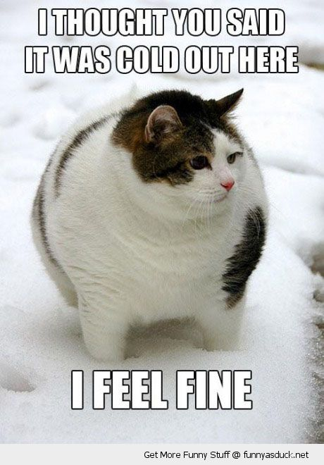 fat cat lolcat animal snow you said cold out feel fine funny pics pictures pic picture image photo images photos lol