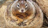 fat squirrel animal groundhog gopher fried egg bacon cheeseburger dont mind if do funny pics pictures pic picture image photo images photos lol