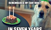 sad dog animal birthday cake party hat first time remembered seven years candles funny pics pictures pic picture image photo images photos lol