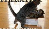 cats animals fits ships get in cardboard box fighting funny pics pictures pic picture image photo images photos lol
