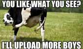 rude flashing cow leg up animal like what you see upload more boys funny pics pictures pic picture image photo images photos lol