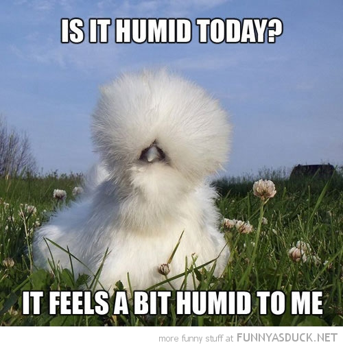 fluffy hairy bird animal feathers humid today funny pics pictures pic picture image photo images photos lol