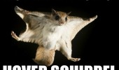 flying animal easy brezzy beautiful hover squirrel funny pics pictures pic picture image photo images photos lol