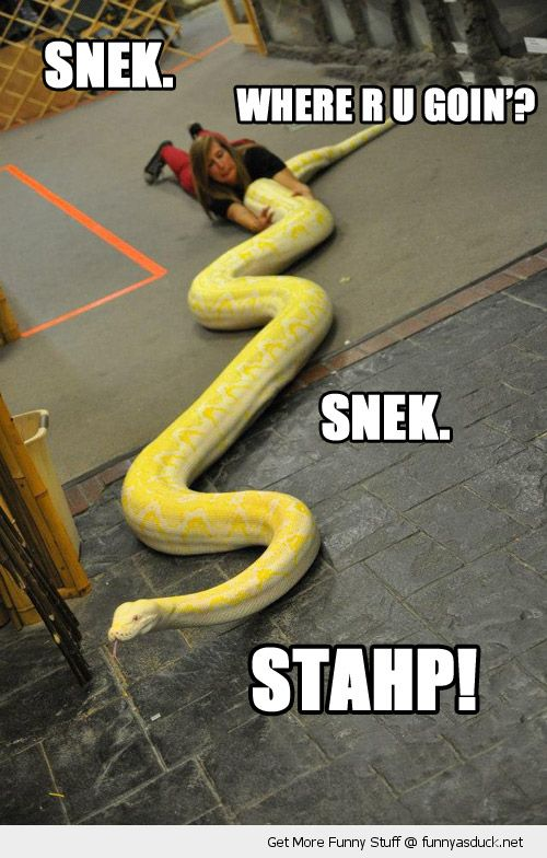 Anaconda snake meme - photo#2