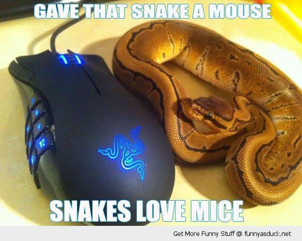 gave that snake a mouse love mice computer pc laptop animal funny pics pictures pic picture image photo images photos lol