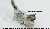 goddamn cat animal lolcat walking stuck snow important shit to do funny pics pictures pic picture image photo images photos lol