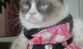 grumpy angry cat lolcat animal wearing dress skirt pretty sure claw eyes out  funny pics pictures pic picture image photo images photos lol