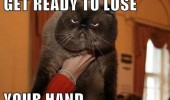 grumpy angry cat animal get ready lose hand funny pics pictures pic picture image photo images photos lol