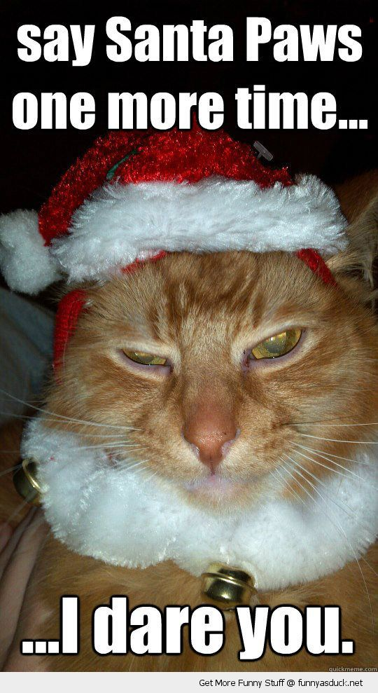 grumpy angry cat lolcat animal xmas christmas hat santa paws one more time dare you funny pics pictures pic picture image photo images photos lol