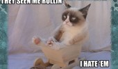 grumpy angry cat lolcat animal sleigh sledge snow see me rollin hate them funny pics pictures pic picture image photo images photos lol