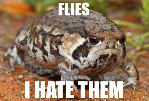 grumpy angry toad frog animal hate flies them funny pics pictures pic picture image photo images photos lol