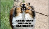 happy dog animal fetch stick mouth assistant branch manager funny pics pictures pic picture image photo images photos lol