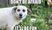 happy smiling dog animal don't be afraid it'll be fun funny pics pictures pic picture image photo images photos lol