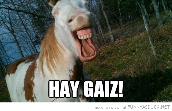 happy smiling horse animal teeth hey guys hay guiz funny pics pictures pic picture image photo images photos lol