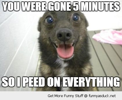 happy smiling cute dog animal gone 5 minutes peed on everything funny pics pictures pic picture image photo images photos lol