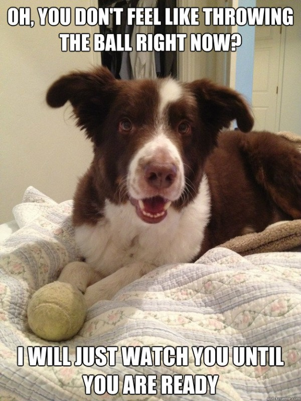 happy dog animal smiling i'll wait watch throw ball fetch bed  funny pics pictures pic picture image photo images photos lol