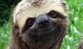 happy smiling sloth animal go on i'm listening funny pics pictures pic picture image photo images photos lol