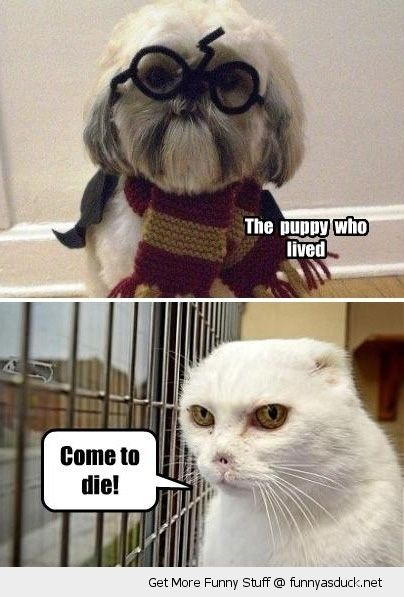 harry potter dog voldemort cat animals come to die movie film funny pics pictures pic picture image photo images photos lol