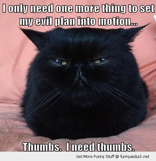 hatching evil plan suspicious cat lolcat animal need thumbs funny pics pictures pic picture image photo images photos lol