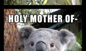 hey there sexy koala bear tree branch shocked surprised leaf moth holy mother animal cute funny pics pictures pic picture image photo images photos lol