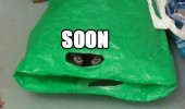 soon cat lolcat animal hiding carrier plastic bag peeking looking evil eyes funny pics pictures pic picture image photo images photos lol