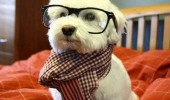 hipster dog meme glasses scarf animal dogwhistle probably never heard it funny pics pictures pic picture image photo images photos lol