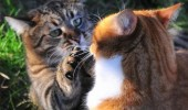 hold still something whiskers cat animal lolcat talking funny pics pictures pic picture image photo images photos lol