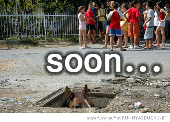 horse hole ground looking out soon animal funny pics pictures pic picture image photo images photos lol