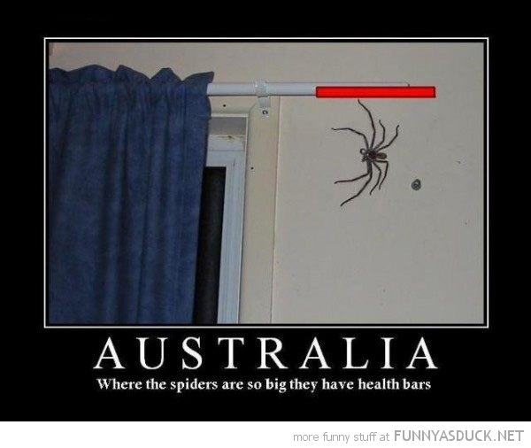 huge spider insect australia health bar gaming boss fight funny pics pictures pic picture image photo images photos lol