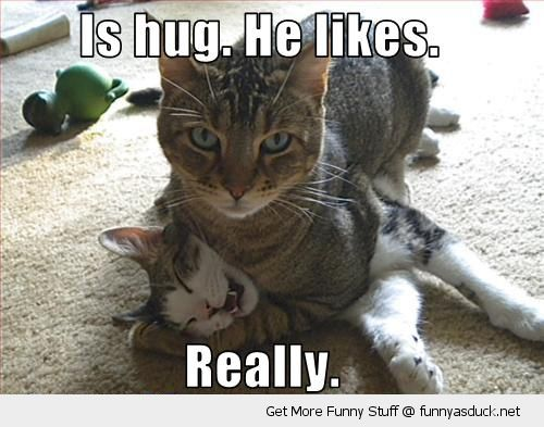 its hug cuddle lolcat cat animal he likes it really suspicious fighting funny pics pictures pic picture image photo images photos lol