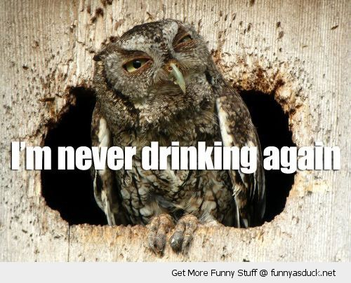 hungover owl bird animal tree never drinking again funny pics pictures pic picture image photo images photos lol
