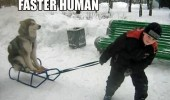 husky dog animal sled sledge snow boy pulling faster human funny pics pictures pic picture image photo images photos lol