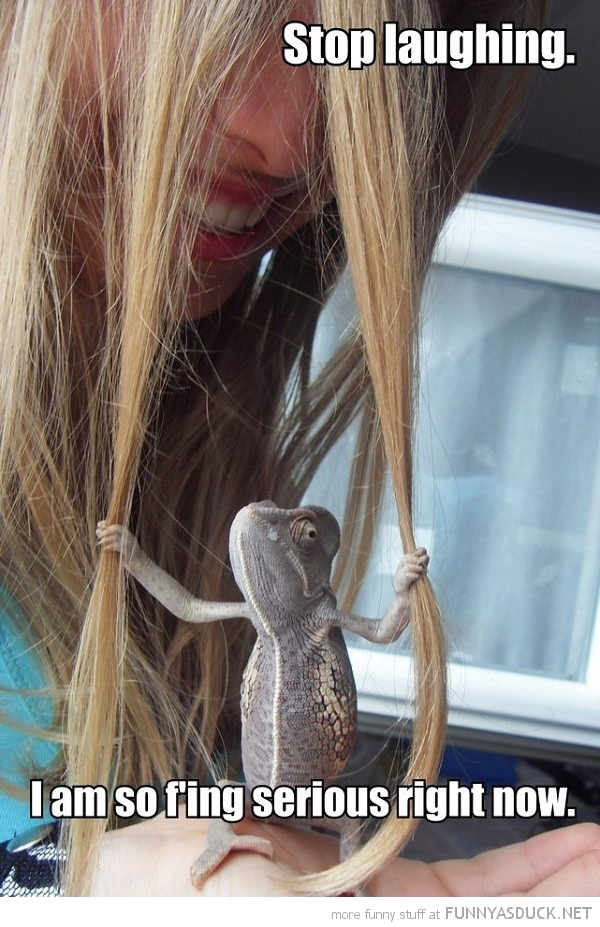 iguana lizard animal pull girls hair stop laughing serious funny pics pictures pic picture image photo images photos lol